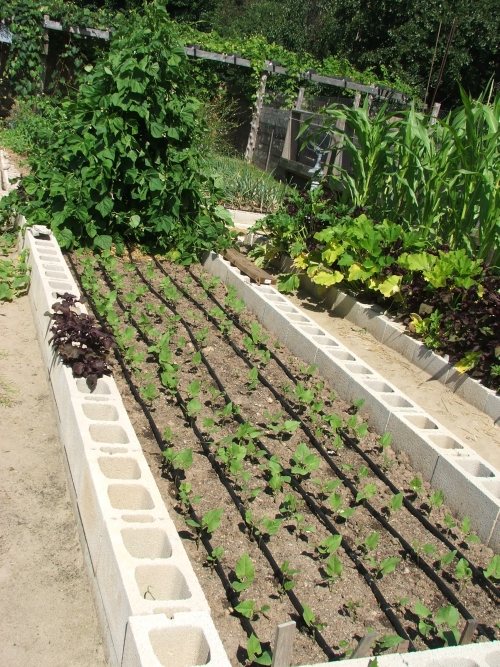 Tips for installing efficient Drip Irrigation